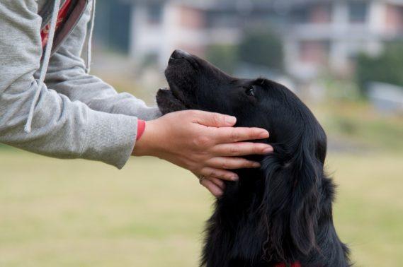 見つめあう飼い主と犬