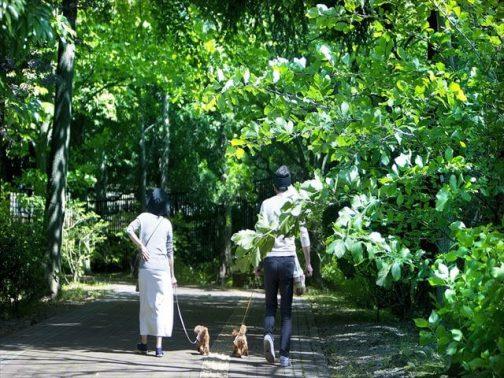 夫婦が愛犬と散歩