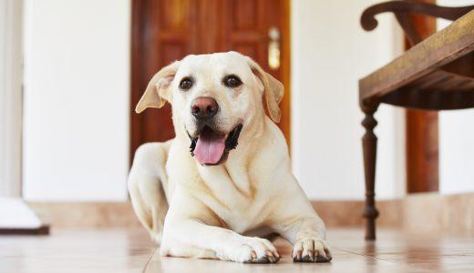 大型犬を無理して宿泊させず、自宅で快適に過ごせるペットシッターとは?