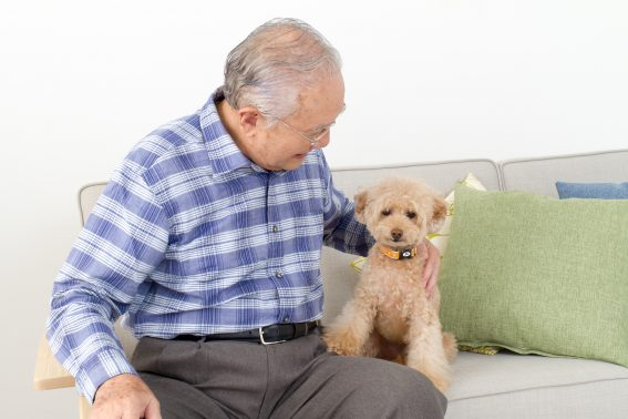 おじいちゃんと犬