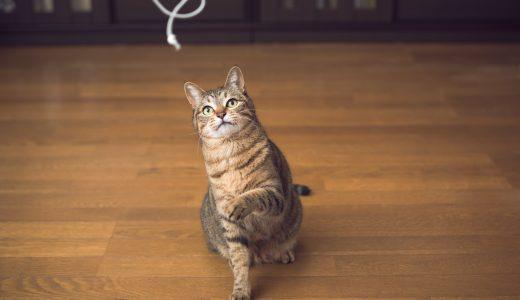 ペットシッター探しなら|愛猫を東京で安心して預けるために必要な事は?