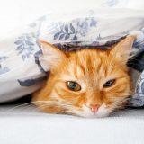 布団にくるまる猫