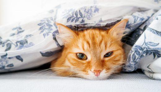 【愛猫を安全に預かります】ペットシッターを利用するメリットと注意点とは