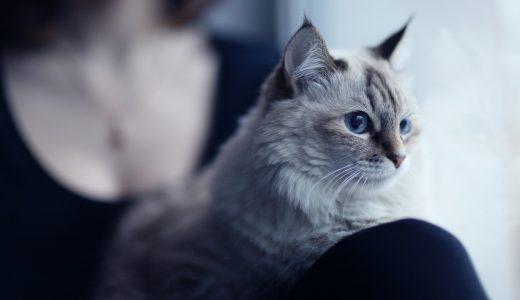 飼い主も満足!東京都港区で猫のペットシッターを探すにはここを見て