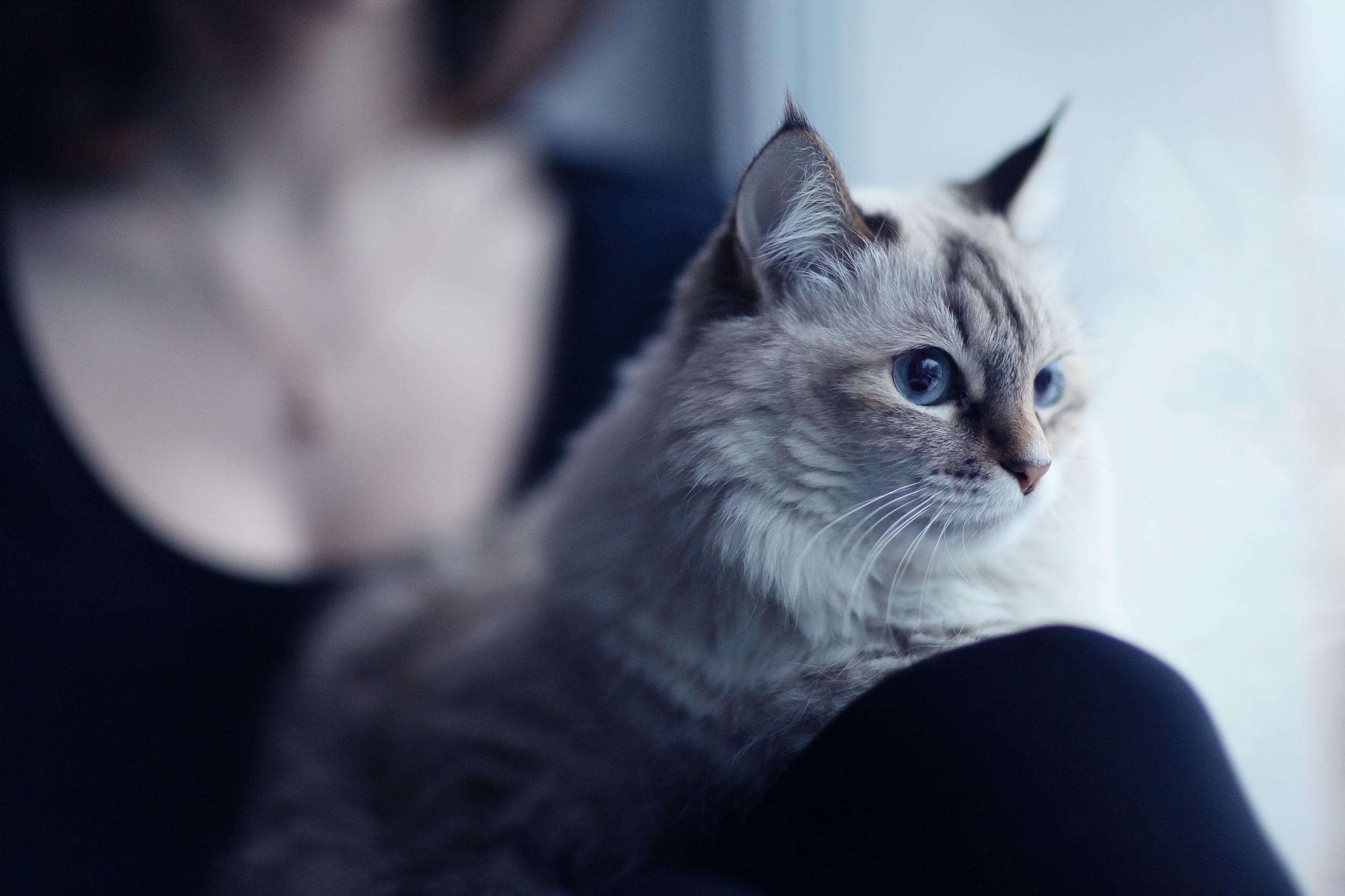 自宅で猫と過ごす女性