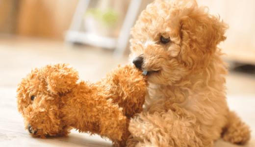 ペットシッターがご自宅で実践する愛犬の簡単自宅お手入れ術(厳選3種)