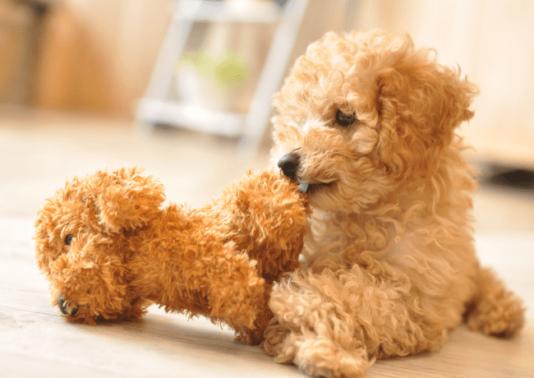 プロシッターが実践している愛犬の簡単自宅お手入れ術(厳選3種)