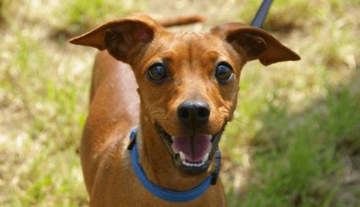 犬の散歩代行のプロが注意する、愛犬散歩の4つのポイント