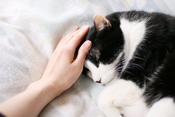 優しくなでられる猫