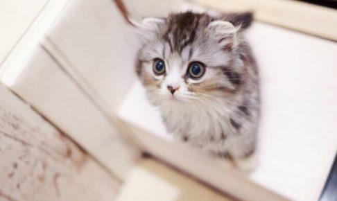 まだ幼いネコ