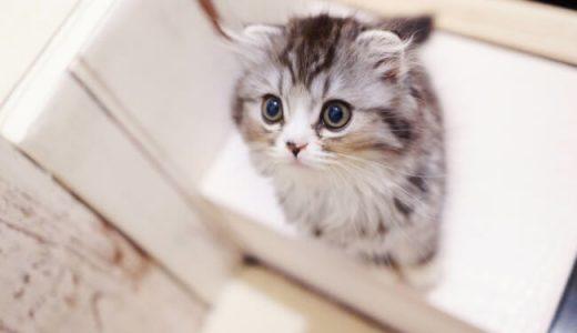 旅行時に愛猫をお留守番させる際のキャットシッターのすすめ