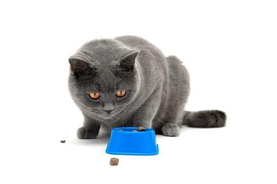 お留守番時の愛猫の食事