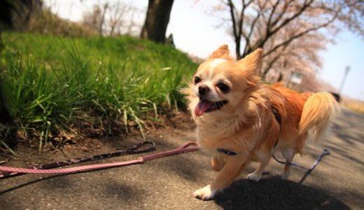 【初めてでも安心♪】犬の散歩代行の申し込みから開始までの流れ