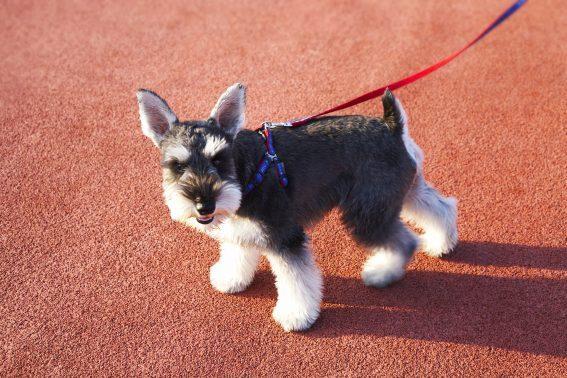 実際に散歩中の犬