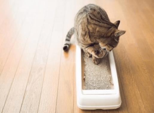 愛猫との生活を豊かにするサービスを