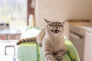 自由奔放な愛猫をペットホテルに預ける時の6つの注意点