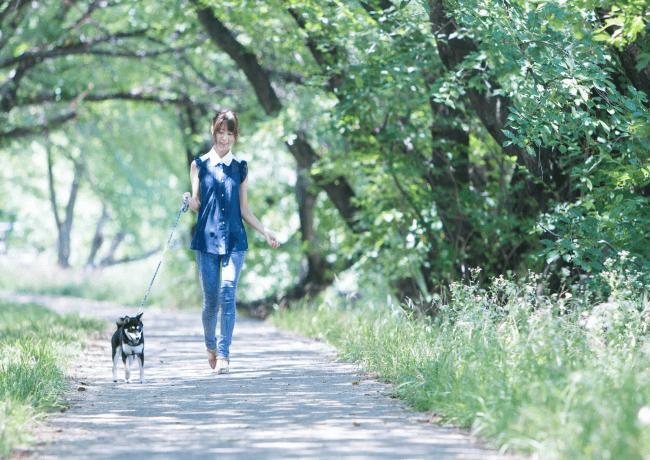 ペットシッターが薦める東京都荒川区の魅力的なお散歩コース!