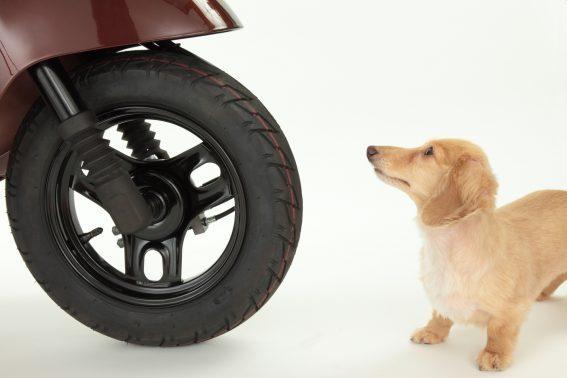 バイクと犬