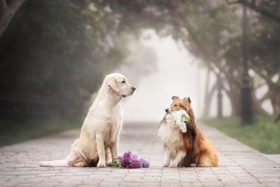 見つめあう犬と犬