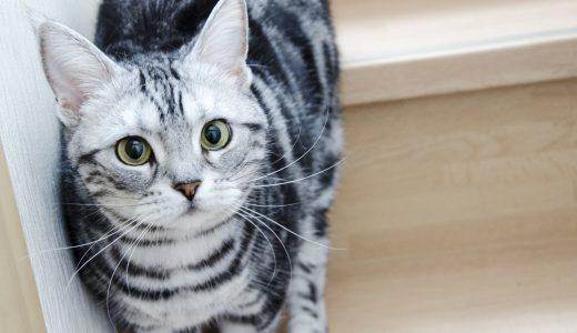 人口が減り続ける東京都目黒区でも猫のペットシッター需要が減らないワケ