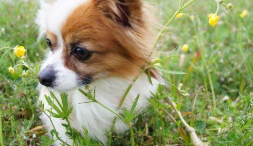 ペットシッター品川区の疑問「午後3時以降は犬の散歩代行ラッシュ」?