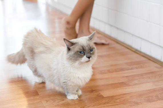 家でのんびりしたい猫