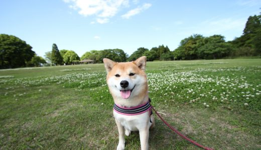 東京都千代田区のペットシッター事情/23区で人口最小、でも公園が広い