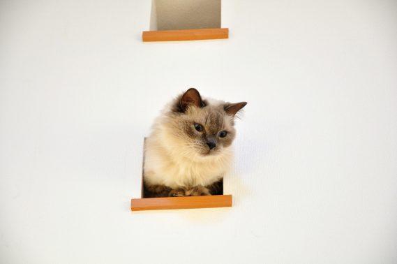 室内でたたずむ猫
