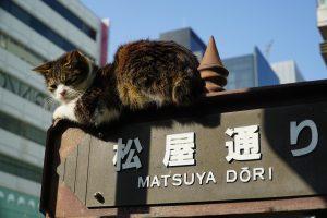 松屋通りの標識の上に乗る猫
