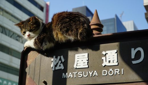 東京都中央区で需要が伸びるペットシッターの理由と相場とは?