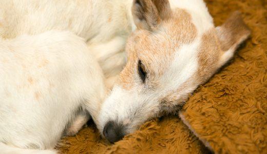 飼い主が老犬を介護するときにこれから気を付けるべき4つのポイント