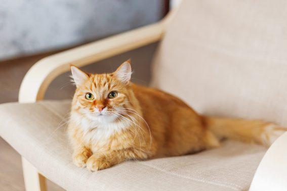 自宅で過ごす猫