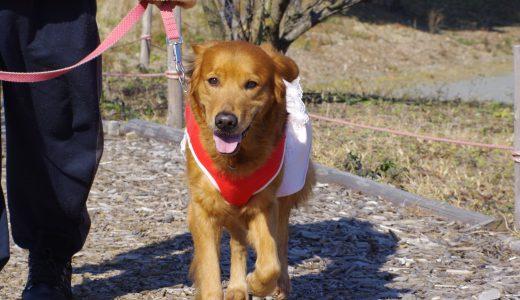 大型犬の散歩を安全に行う為の対策5つ|ペットシッターのアドバイス