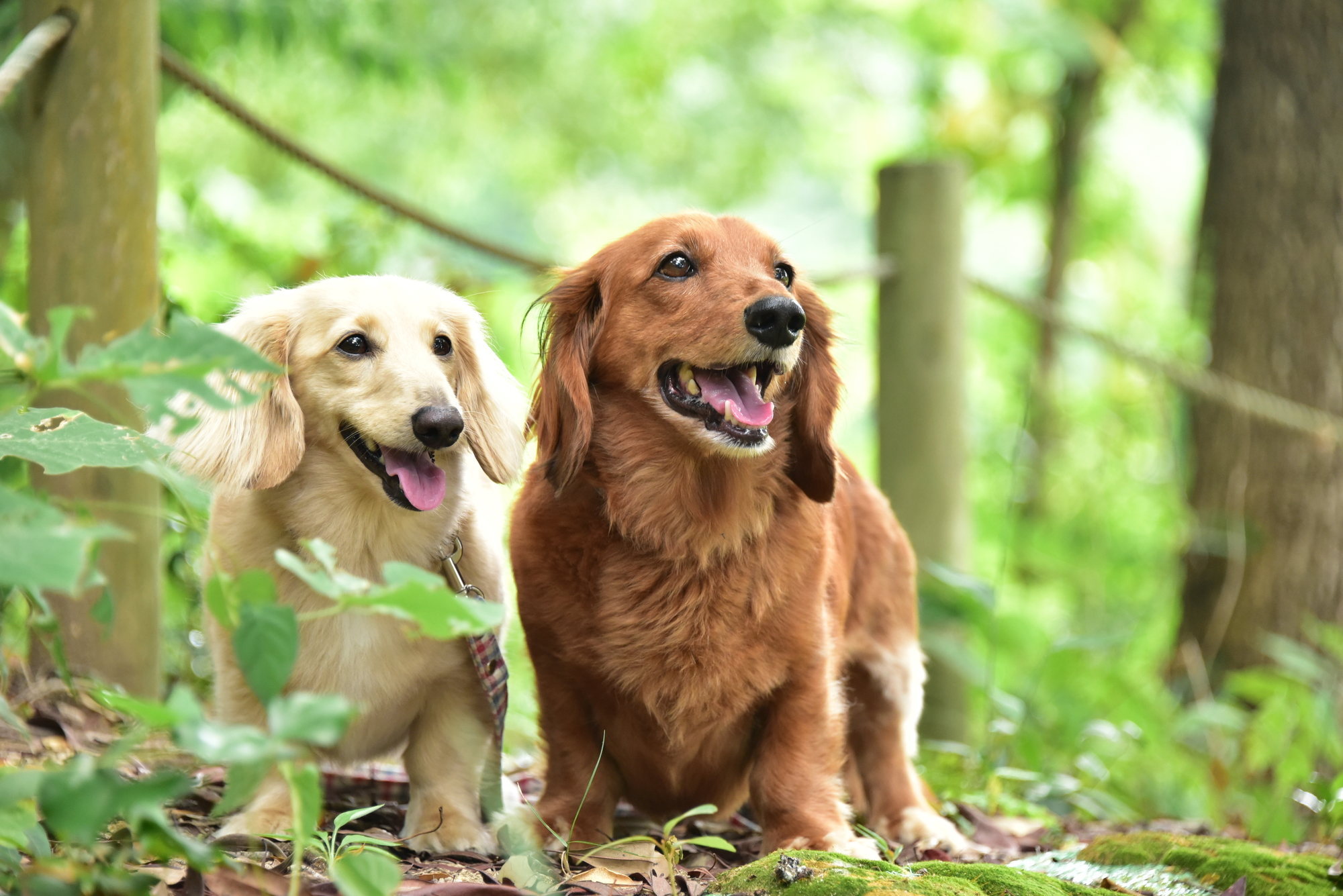 緑豊かな場所で散歩する犬