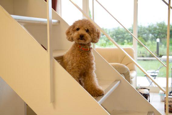 自宅でのんびり過ごす愛犬