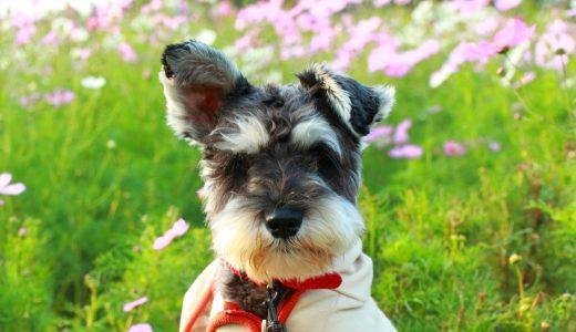 中野区ペットシッター活用法|お仕事中は愛犬の散歩代行で健康管理を