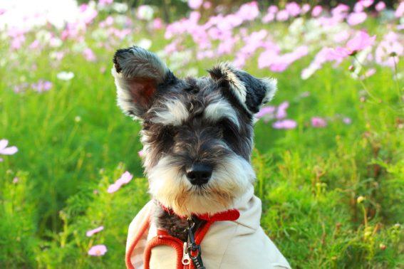 きれいな花の前でお座りする犬