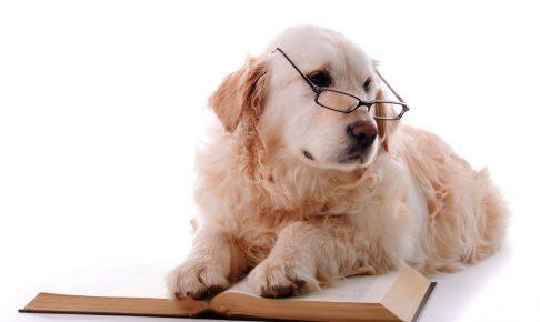 メガネを掛けた犬