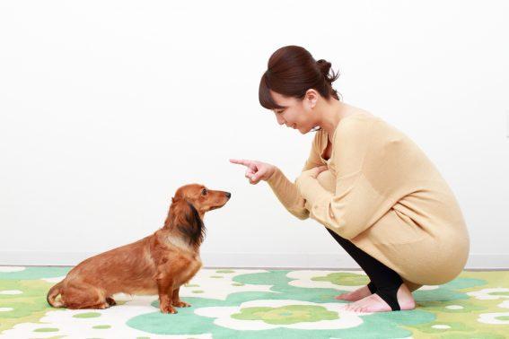 向かい合う女性と犬