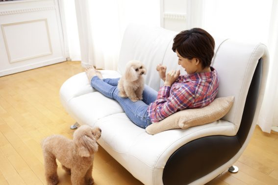 女性と多頭の犬