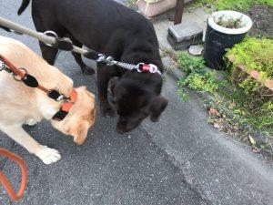 散歩中匂いを嗅ぐ犬