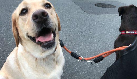 【大型犬を安全に預かります】都内に住む方に便利なペットシッター活用法