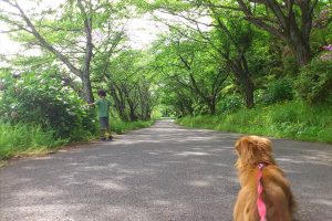 公園で愛犬を散歩