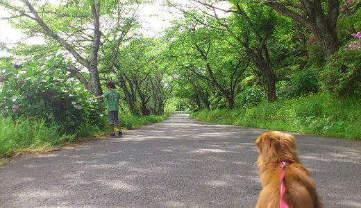 豊島区のペットシッター活用術と3つのオススメお散歩コース!