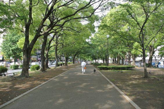 遊歩道の犬