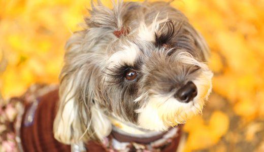 足立区でペットシッターおすすめ犬の散歩代行コース・ドッグラン情報