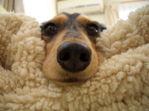 室内で可愛く取れた愛犬