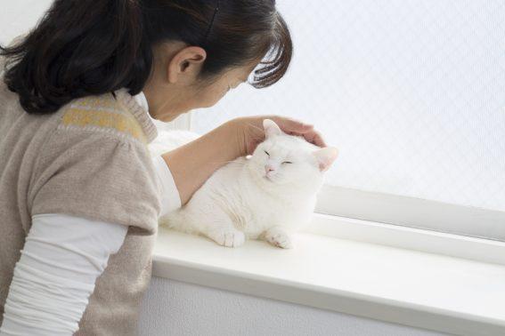 猫のお世話をする女性
