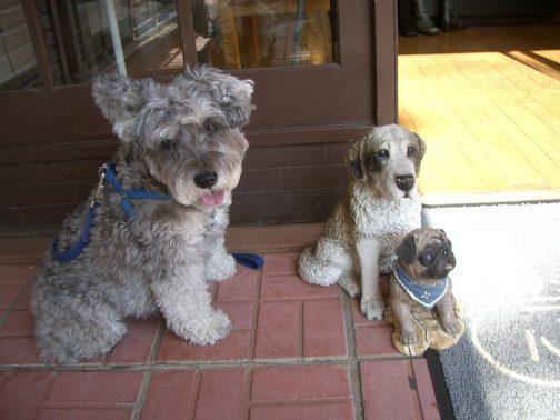 商店街での犬