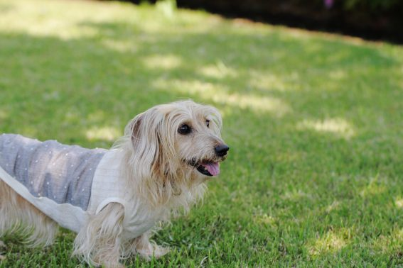 公園で洋服を着た犬
